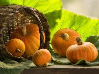 Вкусные и полезные блюда из тыквы